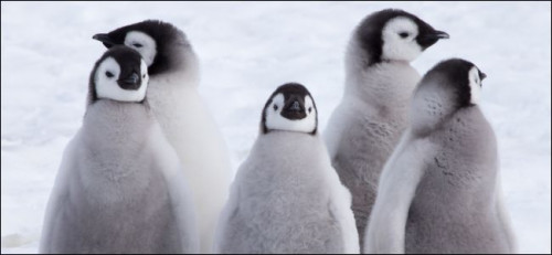 Linux 5.0